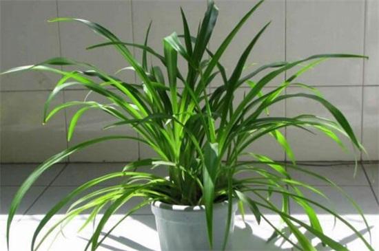 100种适合室内养的植物