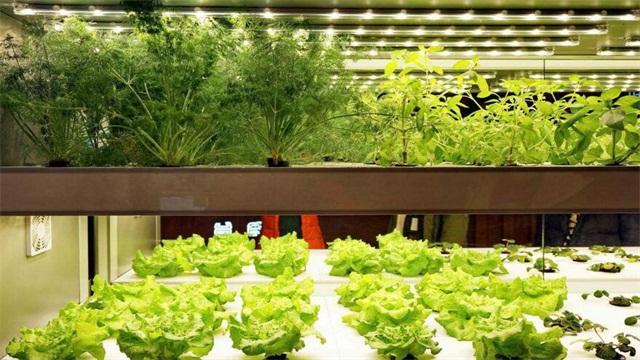 水培蔬菜怎么种植