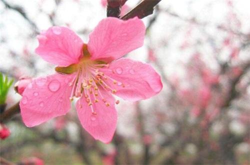 桃花祛斑方法如下,六种方法让你祛斑