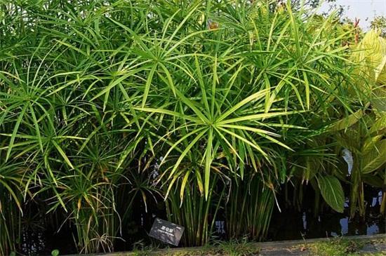 竹子的品种,盘点十种常见品种