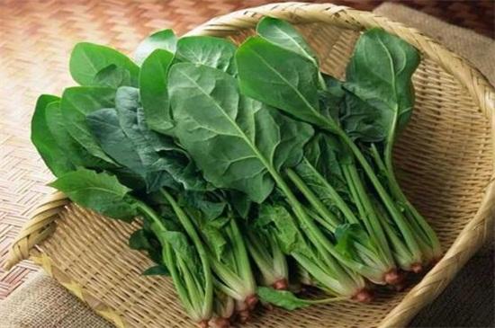 秋季可以种什么蔬菜