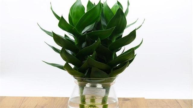 水竹怎么养