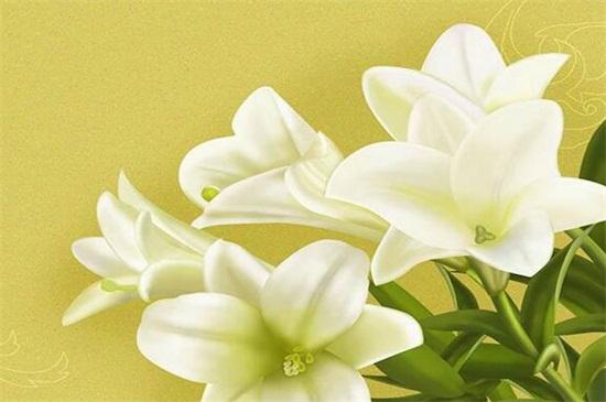 百合花怎样过冬,注意五点使其安全越冬