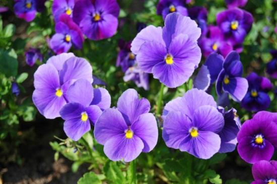 好养花期又长的花卉排名,10种花期长且好养的花