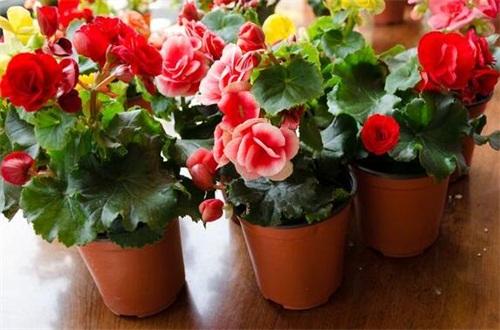 冬天怎么养花不会死