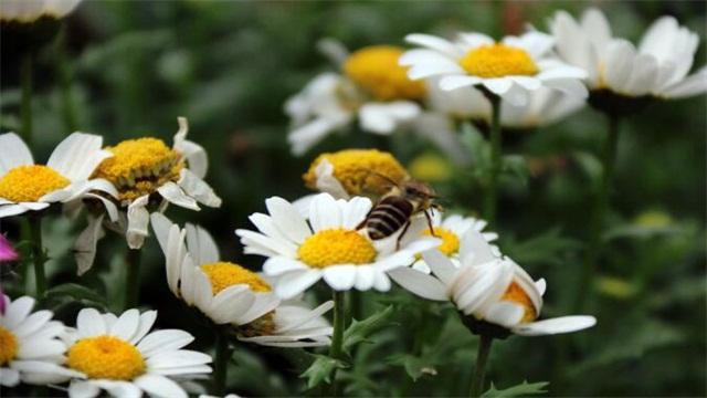 花有多少种,盘点十种常见种类