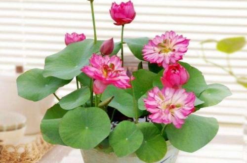 养花的水里放什么好,6种物质各有奇效