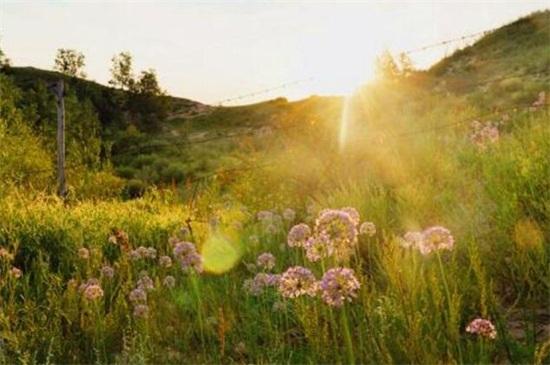家庭冬天怎么养花,定期施肥预防病虫害