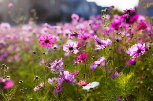 适合家里养的32种花,盘点好养又好看的花卉