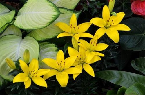 冬季如何防止花冻死,五个方法让花越冬