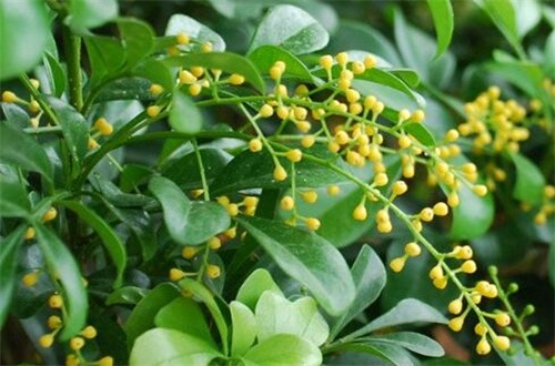 适合家养的138种花卉,详解十种常见植物