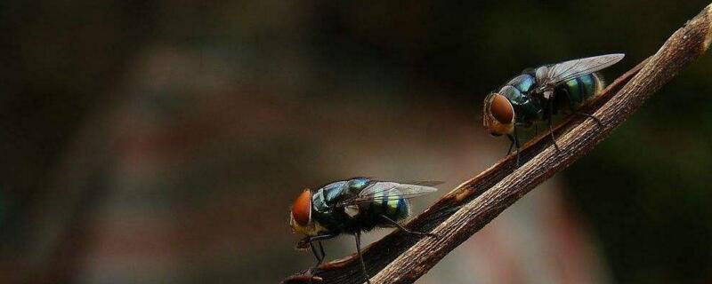 怎样快速消灭大量苍蝇