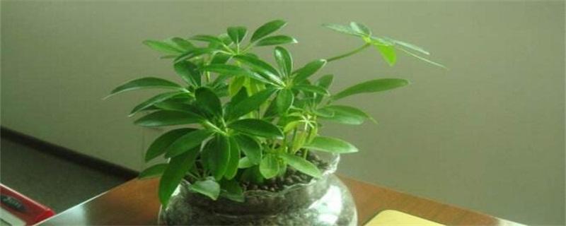 最旺宅的植物