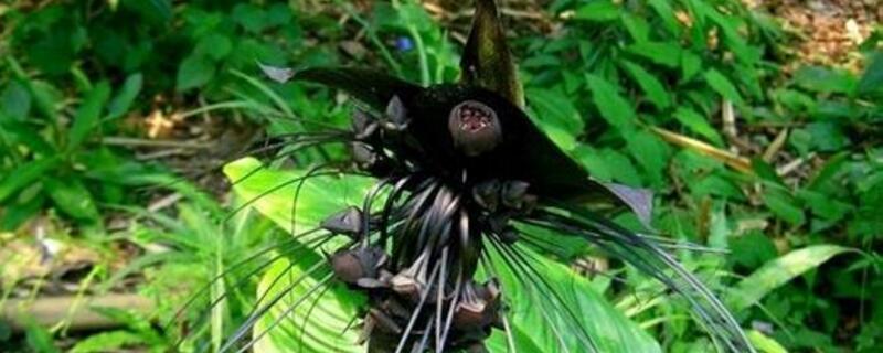 世界上花语最黑暗的花是什么