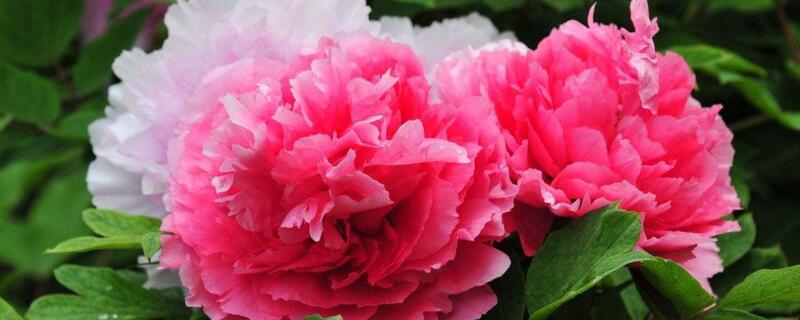 春天的花有哪些