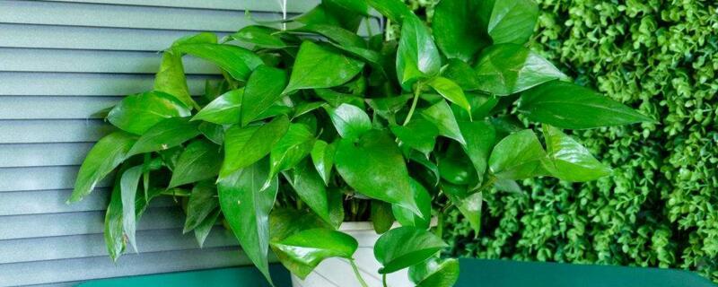 室内植物有哪些