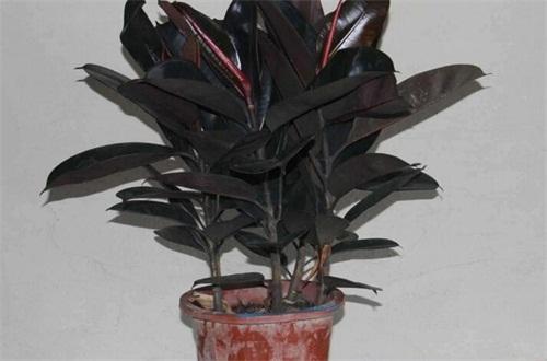 室内大型盆栽植物有哪些,4种常见且最美的植物
