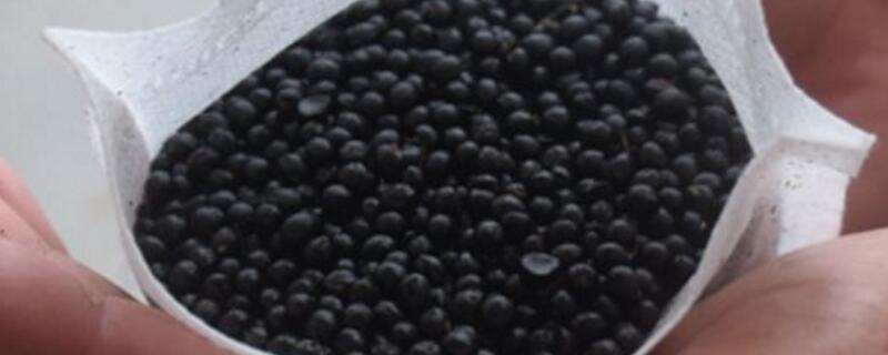 花椒籽怎么种