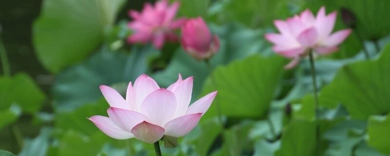 夏天最有代表性的花