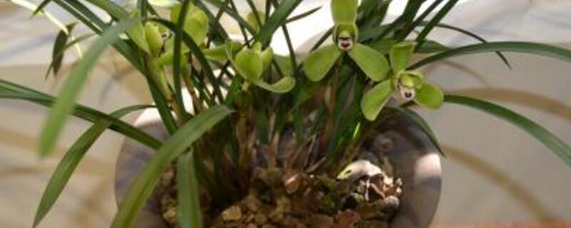 兰花盆景的制作方法