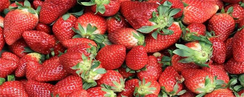 草莓季节是几月份