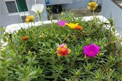 泡沫箱子养花技巧,钻孔铺泥让花更好生长