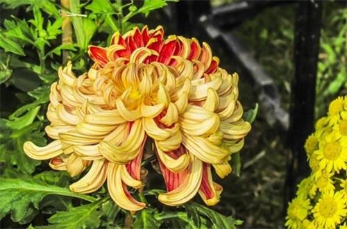 冬季适合养什么花耐寒,盘点十大最耐寒的花卉