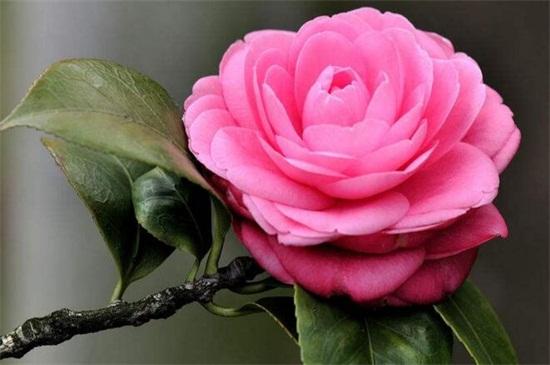 北方冬天适合养什么花,盘点10种极耐寒花卉