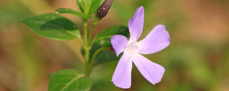四季常青又耐寒的花有哪些