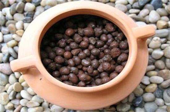哪些盆栽不能用陶粒