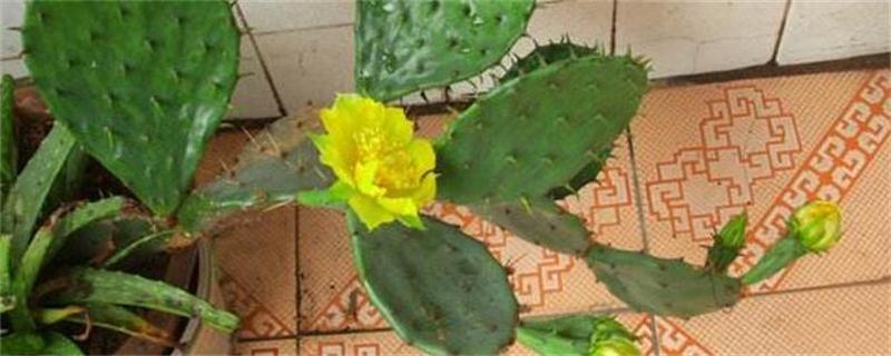 仙人掌怎么繁殖