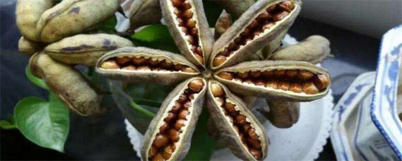 牡丹花种子种植方法