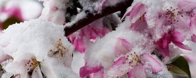 冬季鲜花养护的方法