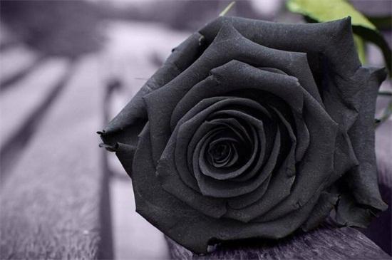 黑玫瑰的和传说