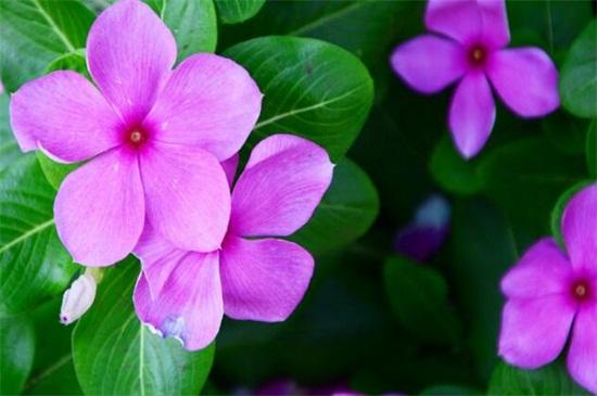 夏天适合种什么花,10种耐高温最美花卉