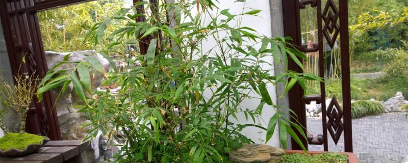 竹子怎么种