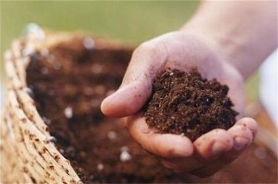 薰衣草种子发芽图片,四步成功让其发芽
