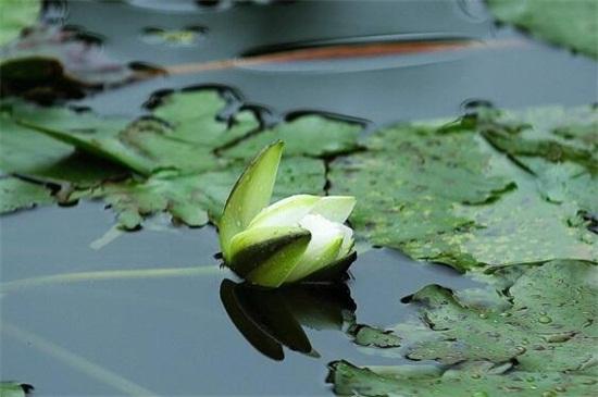 夏天的植物有哪些,盘点十大夏天常见植物