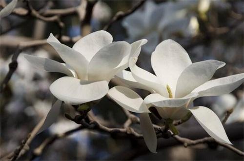 春天有什么花开,论述10种最美花卉