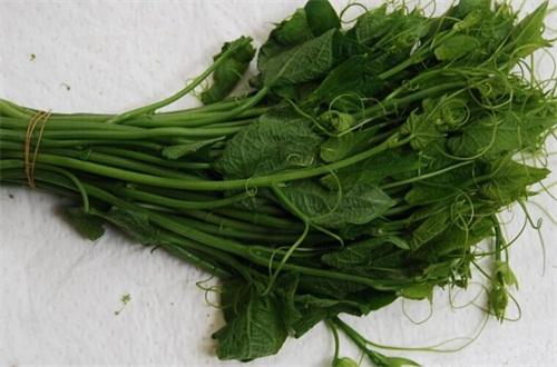 龙须菜是什么菜,野生名菜且营养价值高