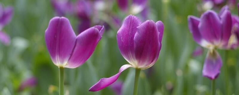 冬季院子里种什么花