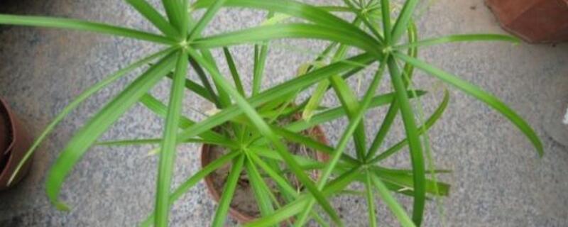 水竹怎么养殖