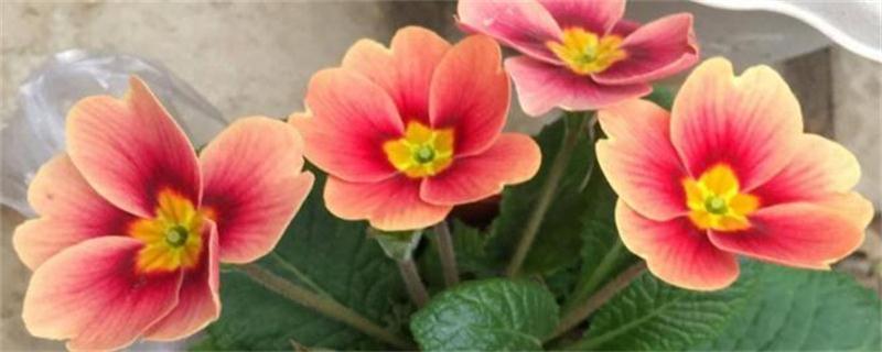 冬天养花怎样保温