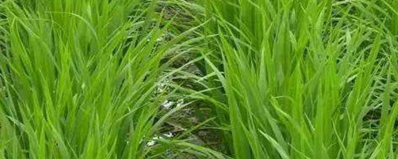 最厉害的烂草根除草剂