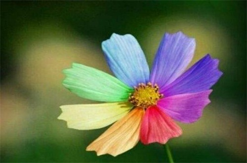 依米花花语是什么,瞬间的灿烂和奇迹