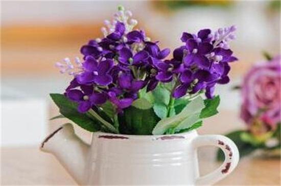 哪些花不适合淘米水
