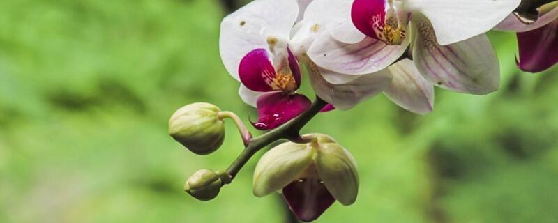 兰花浇水的正确方法
