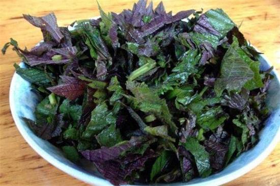 紫苏怎么吃,紫苏孕妇可以吃吗