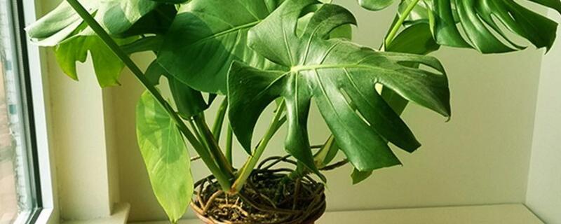 天南星科植物有哪些