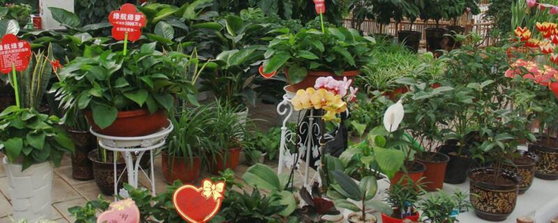 家庭花卉养殖技巧